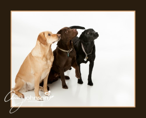 Evergreen pet photographer