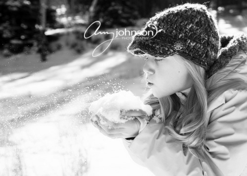 Evergreen snow portraits