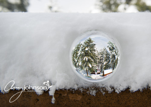 Evergreen snow photography